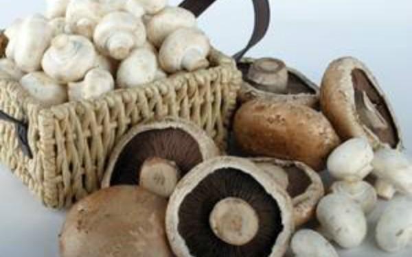 caracteristicas de las setas hongos
