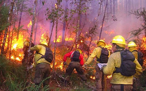 Personas trabajando para apagar un incendio forestal
