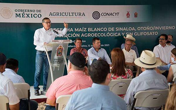 Presentación de la cosecha maíz blanco en Sinaloa con transición agroecológica y sin glifosato